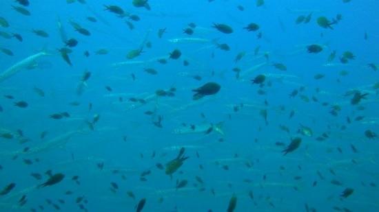Tauchen Islas Hormigas